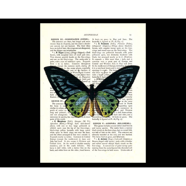 Art on antique book page. Birdwing Butterfly