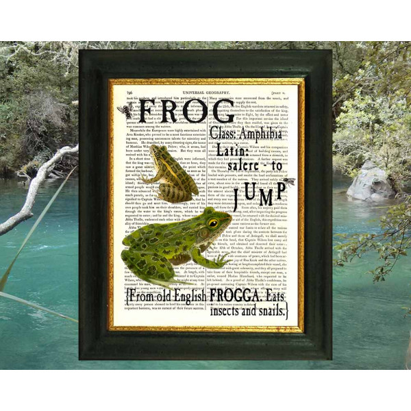 Art on antique book page. All about Frogs