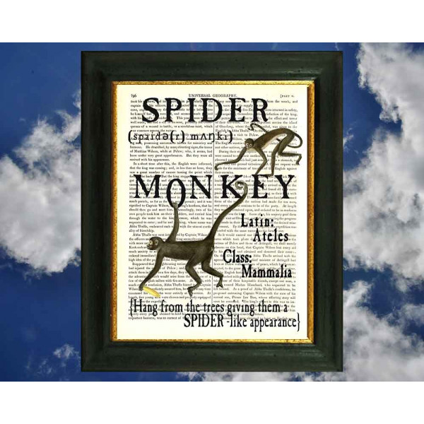 Art on antique book page. All about Spider Monkeys