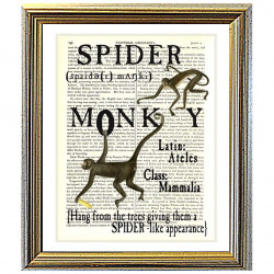 All about Spider Monkeys