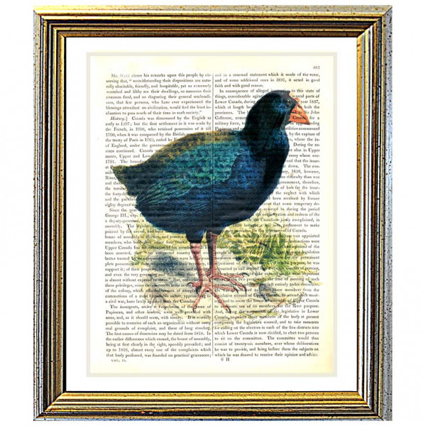 Art on antique book page. Takahe Bird of New Zealand