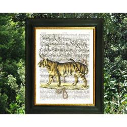 Royal Tigress on a Map of India