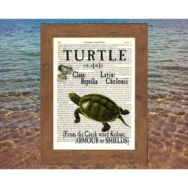 Art on antique book page. All about Turtles