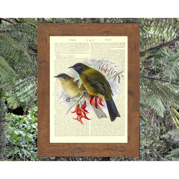 Art on antique book page. Bellbirds
