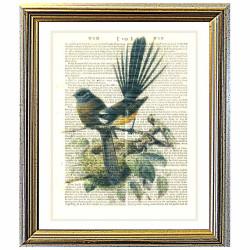 New Zealand Fantail Bird