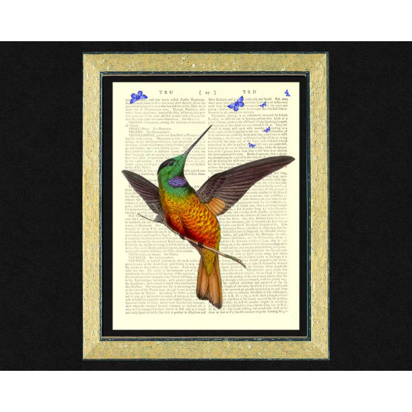 Art on antique book page. Star-fronted Hummingbird and Butterflies