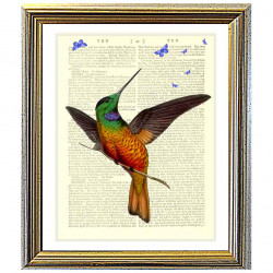 Star-fronted Hummingbird and Butterflies