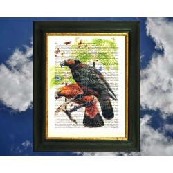 Kaka Parrots and Butterflies