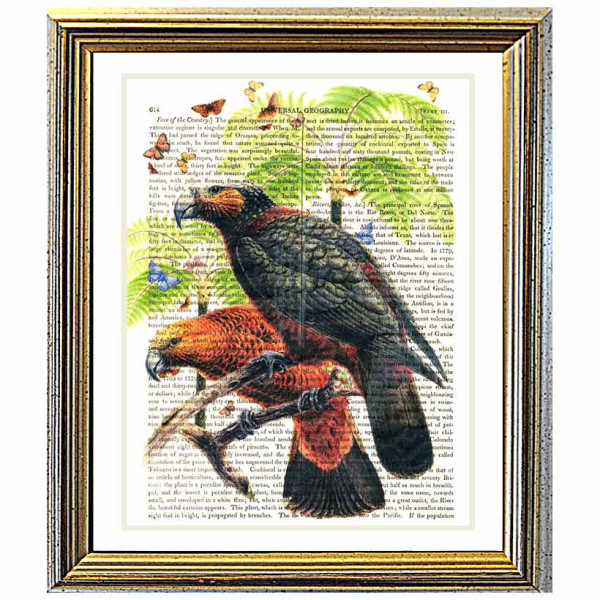 Art on antique book page. Kaka Parrots and Butterflies