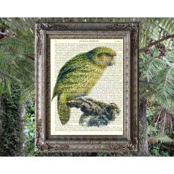 Kakapo Parrot from New Zealand