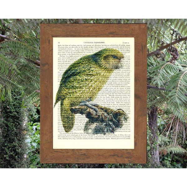 Art on antique book page. Kakapo Parrot from New Zealand