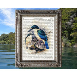 Kingfisher from New Zealand