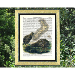 Kiwi birds and map of New Zealand
