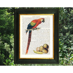 Scarlet Macaw and Fruit