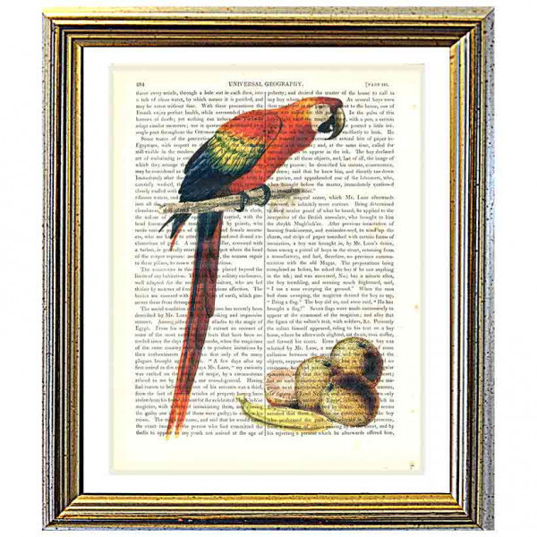 Art on antique book page. Scarlet Macaw and Fruit