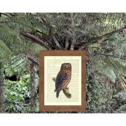 Morepork Owl