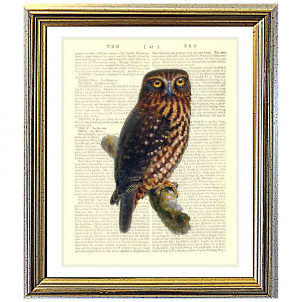 Art on antique book page. Morepork Owl