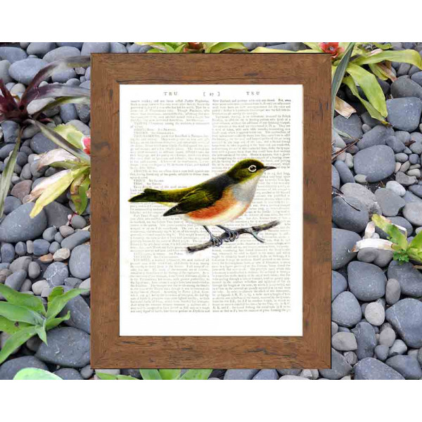 Art on antique book page. Silver-eye Bird