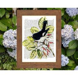 Tomtit bird from New Zealand
