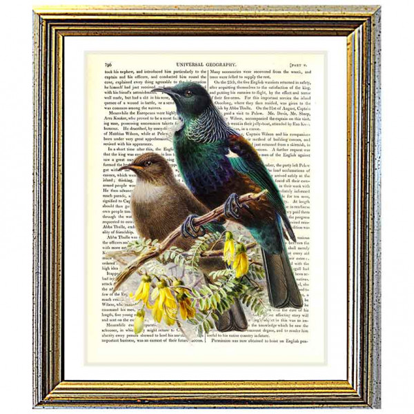 Art on antique book page. New Zealand Tui birds in a Kowhai Tree