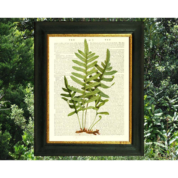 Art on antique book page. Vintage American Fern