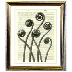 Maidenhair fern fronds slowly unfurling