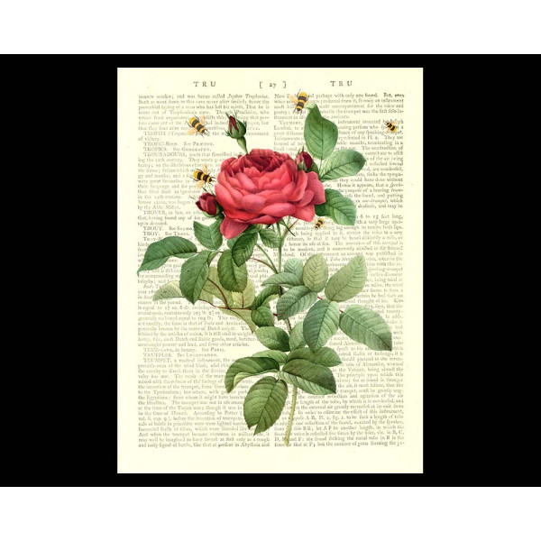 Art on antique book page. Red Rose and Honey Bees
