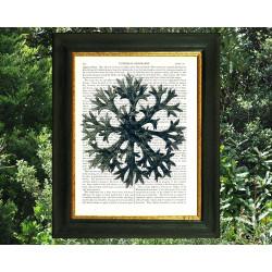 Snowflake-like Saxifrage flower.