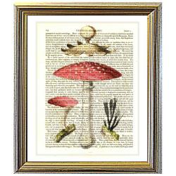 Toadstool and Mushroom