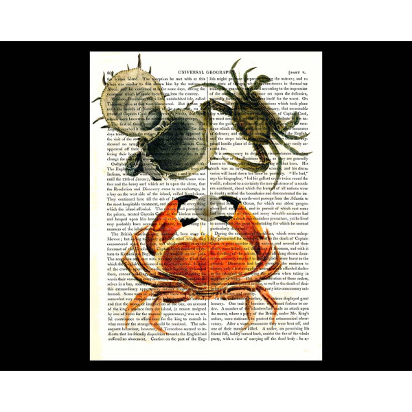 Art on antique book page. Crabs Pinching Oyster's Pearl