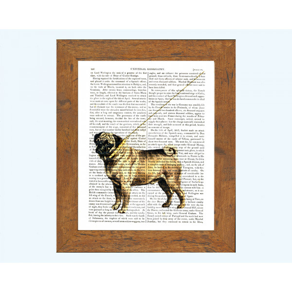 Art on antique book page. Pug Dog With Gold Collar