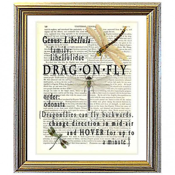 Art on antique book page. All About Dragonflies