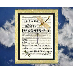 All About Dragonflies
