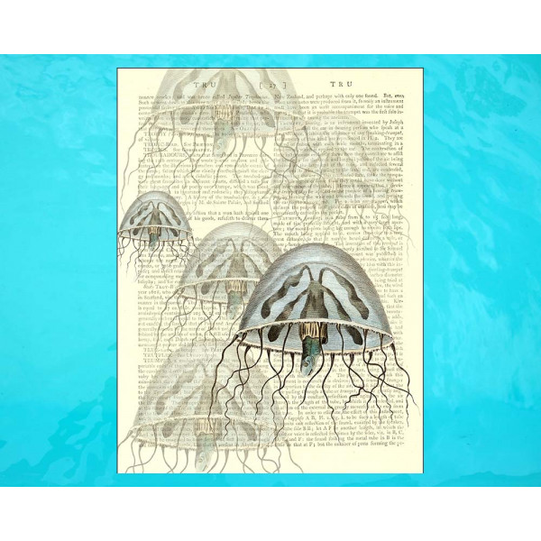Art on antique book page. Pink and Blue Jellyfish