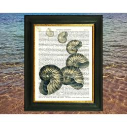 Nautilus Shells Drifting Away