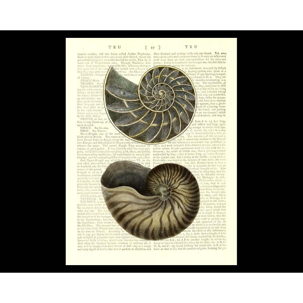 Art on antique book page. Nautilus Shell and Cross Section