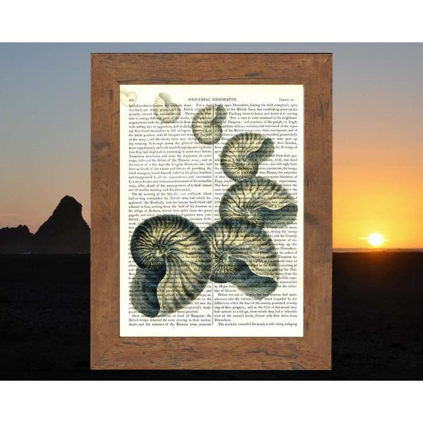 Art on antique book page. Nautilus Shells Drifting Away