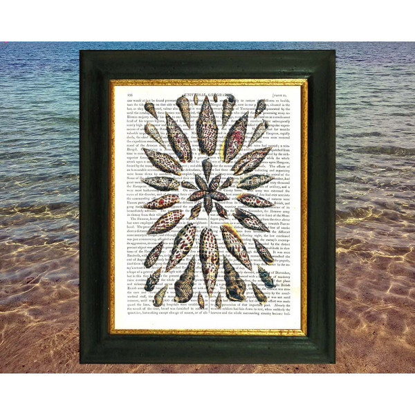 Art on antique book page. Cone Seashells in Geometric Pattern