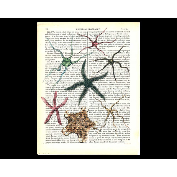 Art on antique book page. Spectacular Starfish