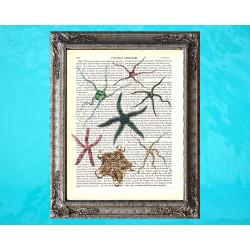 Spectacular Starfish